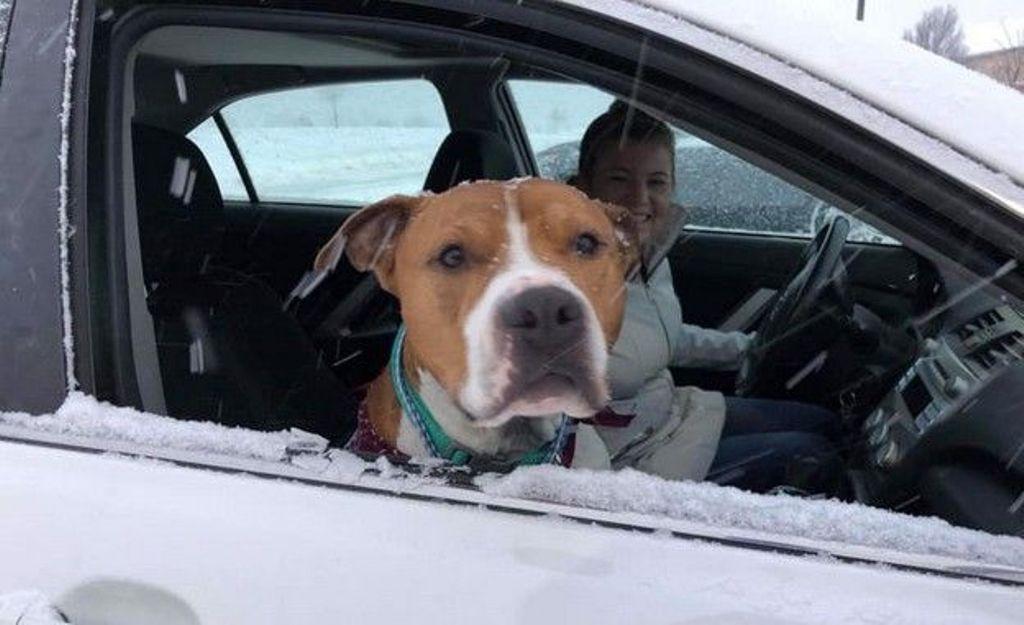 Σκύλος που είχε κλαπεί ταξίδεψε 3.200 χλμ. για να επιστρέψει στο σπίτι του