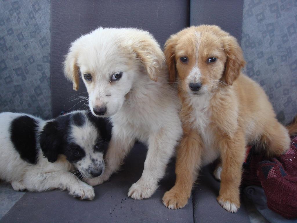 Θεσσαλονίκη: Σχέδιο για δημοτικό κτηνιατρείο και ασθενοφόρο ζώων