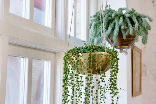 Οκτώ εντυπωσιακά φυτά εσωτερικού χώρου κατάλληλα για κρεμαστές γλάστρες